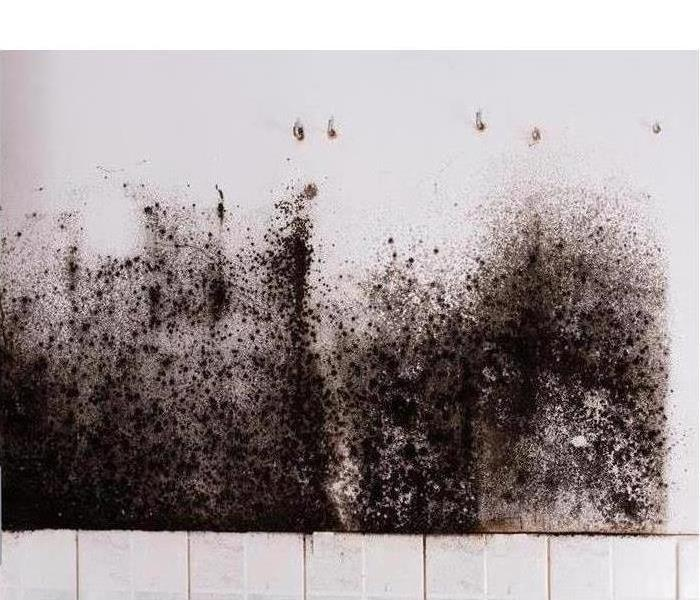 Image of black mold growing on white wall above white tiles.